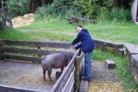 sam-feeding-the-pig.JPG
