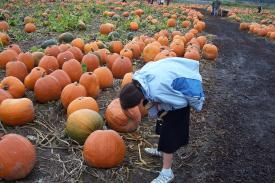 Samantha Picking out her Pumpkin