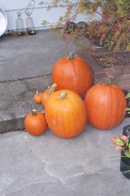 Pumpkins @ The Hefford-Andersons